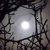 Jardiner avec la lune : janvier 2011