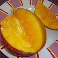 Plantation d'un noyau de mangue