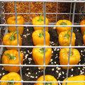 L'Odyssée végétale au Salon de l'Agriculture