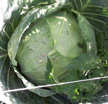F vrier semis et plantations des l gumes - Quel legumes planter en octobre novembre ...