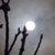 Jardiner avec la lune : avril 2011