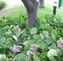 Fleurir le pied d'un arbre