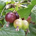 Classification des fruits