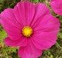 Quelles fleurs semer ou planter en avril au jardin ?