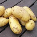 Pomme de terre Pompadour : résultats du concours photos