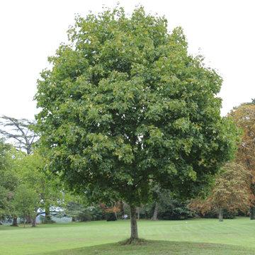 Planter un arbre - Plantation d un fruitier ...