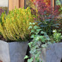 Jardinière d'hiver colorée