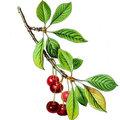 Arbres fruitiers : traitement de l'hiver