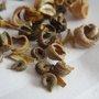 Ou acheter ses graines de fleurs, légumes, aromatiques et gazon ?