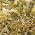 Eliminer la mousse dans une pelouse