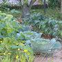Le jardinage en octobre
