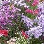 Novembre - Gestes et travaux de saison au jardin