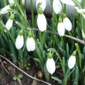 Février - Gestes et travaux de saison au jardin
