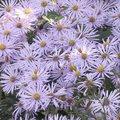 Septembre - Gestes et travaux de saison au jardin