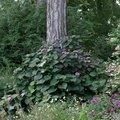 Quelle plante installer à l'ombre au jardin ?