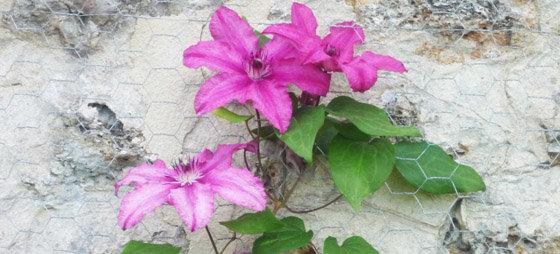 Les fleurs et plantes à l'extérieur