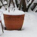 Neige : pas de sel dans le jardin