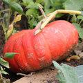Calendrier de récolte des légumes