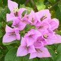 Quelle plante installer en plein soleil au jardin ?