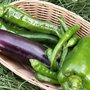 Quels légumes semer ou planter en mai au potager ?