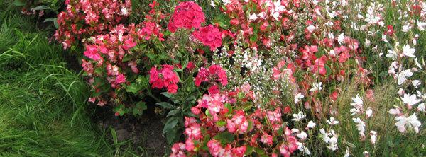 Que faire au jardin d\'ornement en juin ?