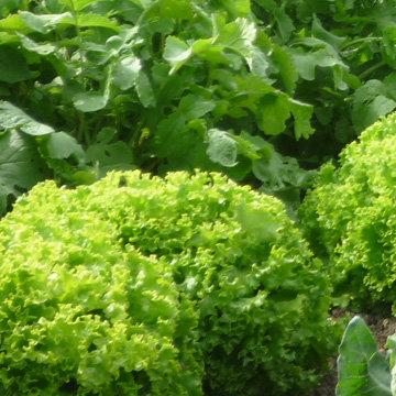 que planter en juillet au potager haricots verts semer de. Black Bedroom Furniture Sets. Home Design Ideas