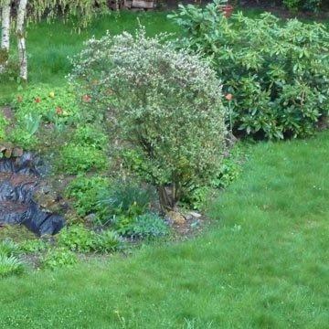 Mon jardin à l'automne