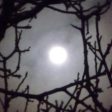 Calendrier lunaire de jardinage septembre 2015 for Jardin lune octobre 2015