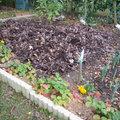 Nettoyage du jardin avant l'hiver