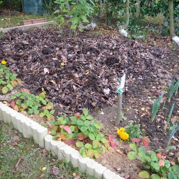 Automne nettoyer le jardin et le potager - Nettoyage du jardin ...