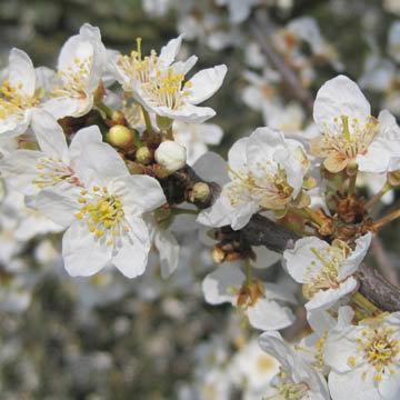 Avril que faire au jardin - Que faire au jardin en avril ...