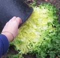 Blanchir les légumes au jardin