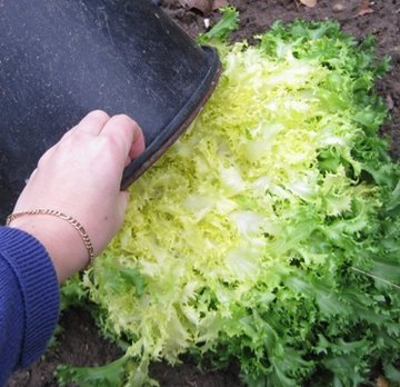 Priver les l gumes de lumi re avant de les r colter - Blanchir legumes avant congelation ...