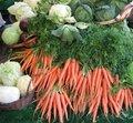 Quels légumes semer ou planter en août au jardin ?