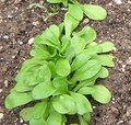Quels légumes semer ou planter en octobre au jardin ?