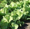 Quels légumes semer ou planter en novembre au jardin ?