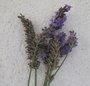 Fleurs de lavande séchées, comment les utiliser ?