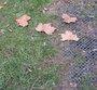 Créer une allée carrossable dans la pelouse