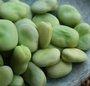 Semer les fèves au potager