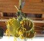 Récolter et faire sécher les tournesols