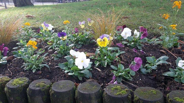 Fleurs et arbustes : entretien, plantation et floraison de décembre