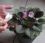 Travaux plantes d'intérieur : le dépoussiérage