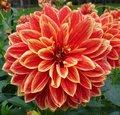 Découvrez les plus beaux bulbes à fleurs d'été