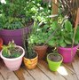 Bien choisir les contenants avant de faire les plantations ?