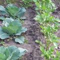Quels légumes semer ou planter en juin au jardin ?