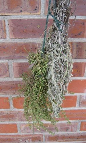 Comment conserver les plantes aromatiques pour l 39 hiver - Comment tailler les geraniums pour l hiver ...
