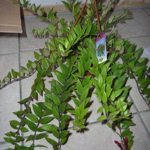 Commande de plantes sur un site artisanal for Commande de plantes