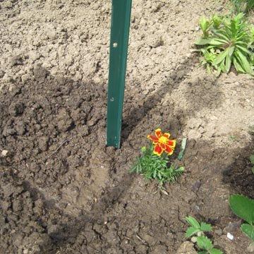 Planter les tomates - Quand planter des tomates cerises ...