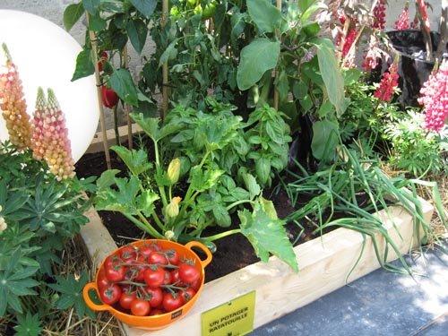 Cultiver Des L Gumes Sur Son Balcon Ou Sa Terrasse
