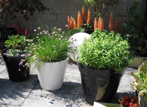 Cultiver des l gumes sur son balcon ou sa terrasse - Que planter sur son balcon ...